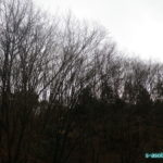 空気銃猟 今年初の出猟でキジに驚かされる