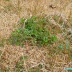 勢力拡大する雑草