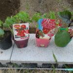 拡張した畑に購入した苗を植える&袋囲い(行灯)の設置