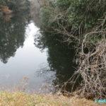 空気銃で新年初出猟、のんびり池を巡回する
