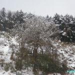 空気銃猟 雪の中ヒヨドリを捕獲