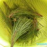 自家製「松の葉サイダー」で暑い夏を乗り切ろう!