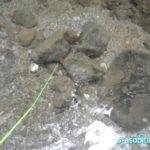 カジカの穴釣りに行ったら撃沈したのでサワガニを採取した